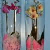 Phalaenopsis kleur 2 tak